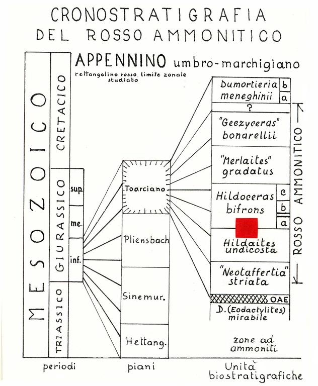 Cronostratigrafia del rosso ammonitico