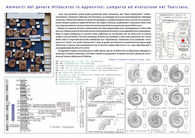 Ammoniti del genere Hildoceras comparsa ed evoluzione nel Toarciano